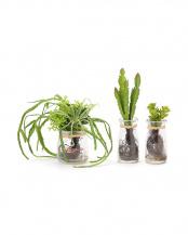 多肉植物 3個セット/フェイクウォーターボトル○PRGI-0390