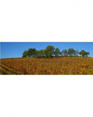 『人気のボルドー右岸!メルローらしい果実味たっぷり赤ワイン』シャトー・ベルコリーヌ2016を見る
