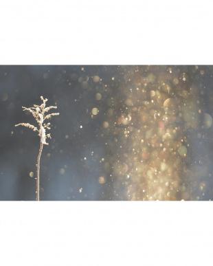 Nebula カートリッジ ダイヤモンドダストを見る