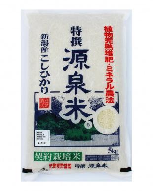 新潟産 特撰源泉米コシヒカリ(白米) 5kg  2袋セットを見る