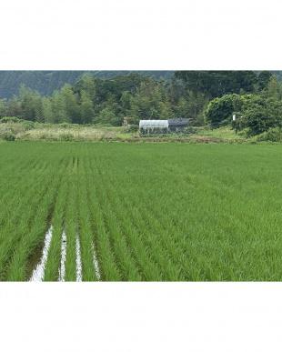 新潟産 泉流米こしいぶき 5kgを見る